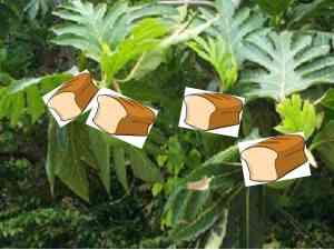 Literal breadfruit